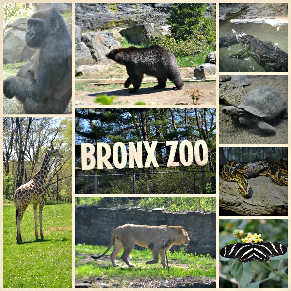 Family Day At The Bronx Zoo Manhattan College